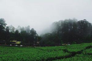 Lembang Bandung.niko budi mulyono unsplash