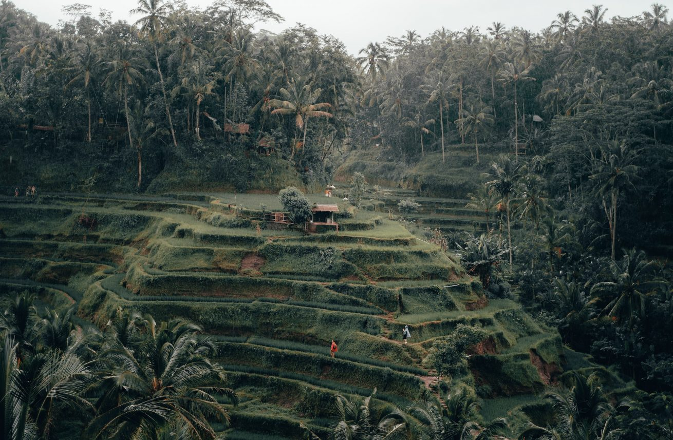 Desa Tegallalang Bali radoslav bali unsplash