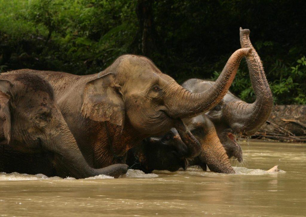 petualangan di Tangkahan dengan Gajah gajah