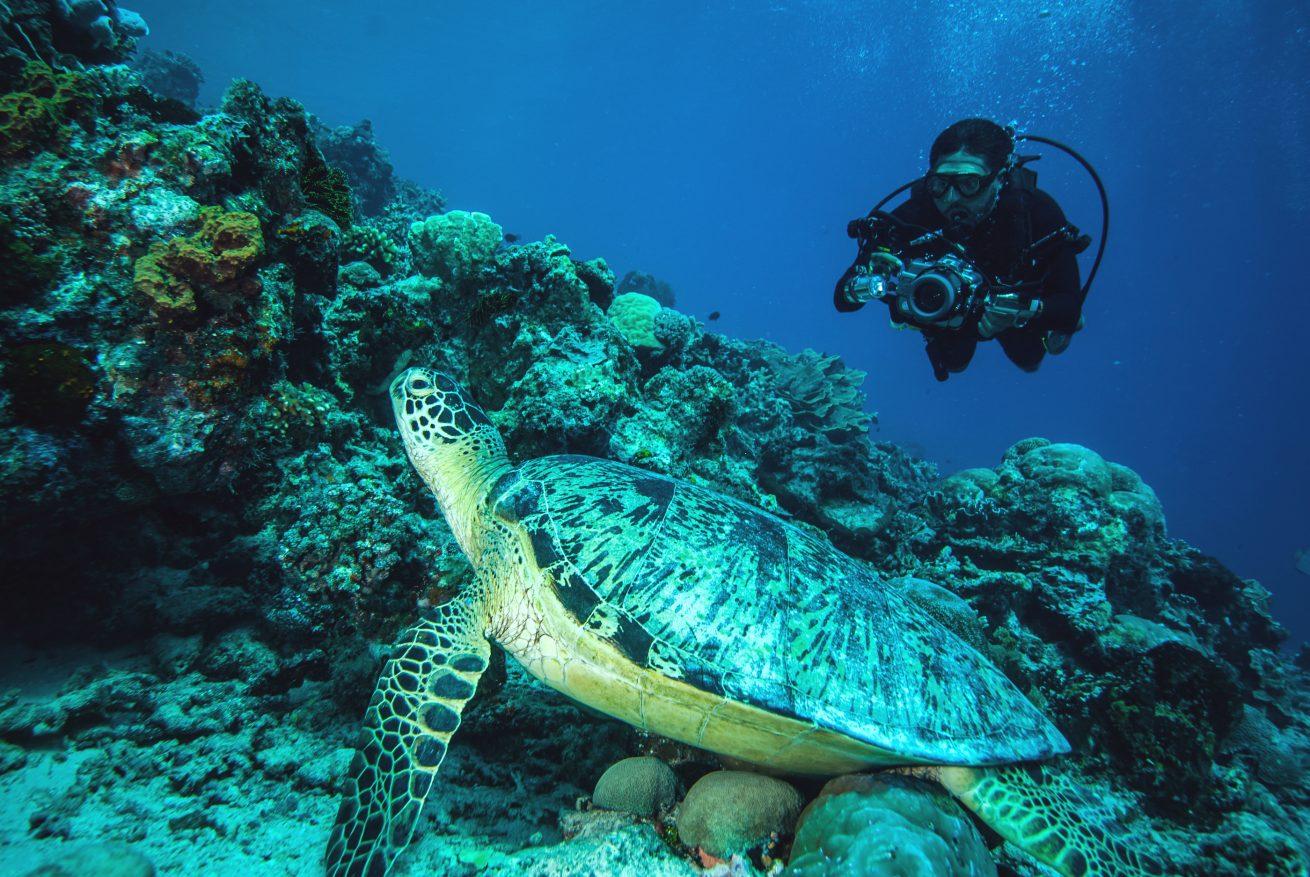 Sensasi wisata dalam air tak sekadar menyelam, tapi ada pula yang untuk berfoto.