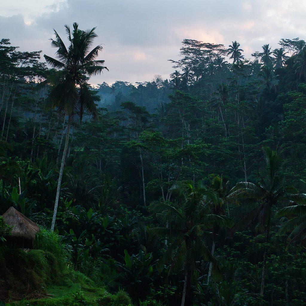 Keheningan Bali langsung memancar dari deretan sawah-sawah terasering.