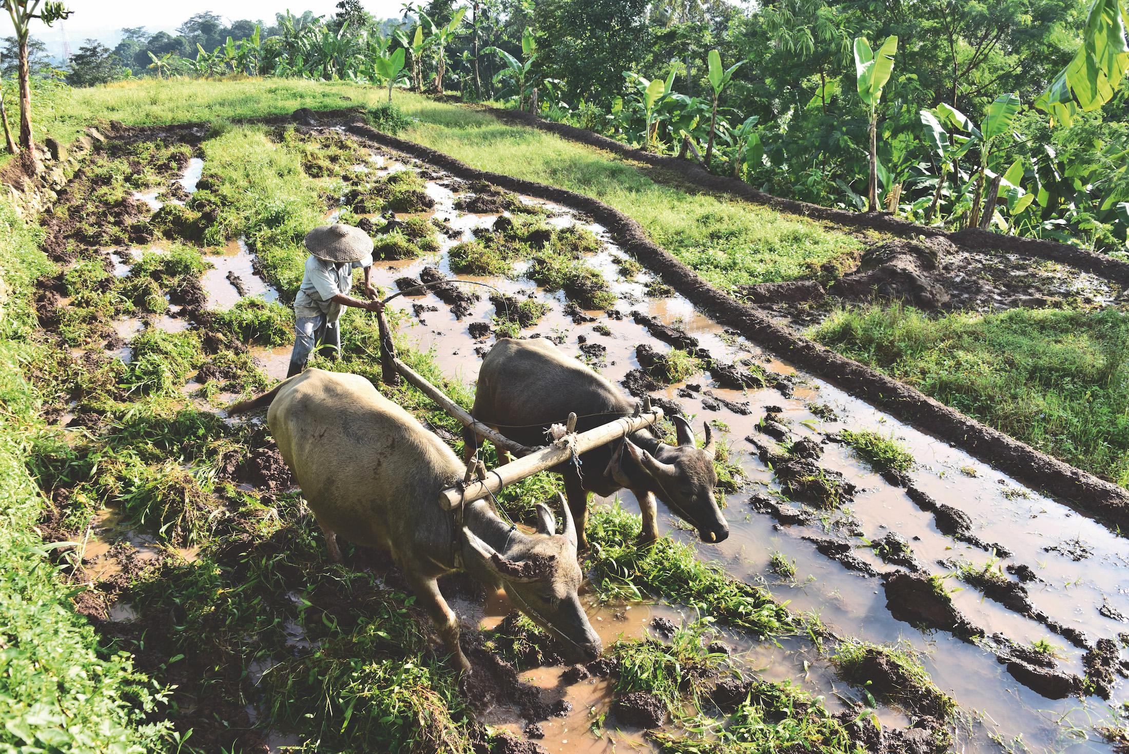 Perjalanan 3 hari di 3 kampung Sunda bisa menjadi alternatif liburan.