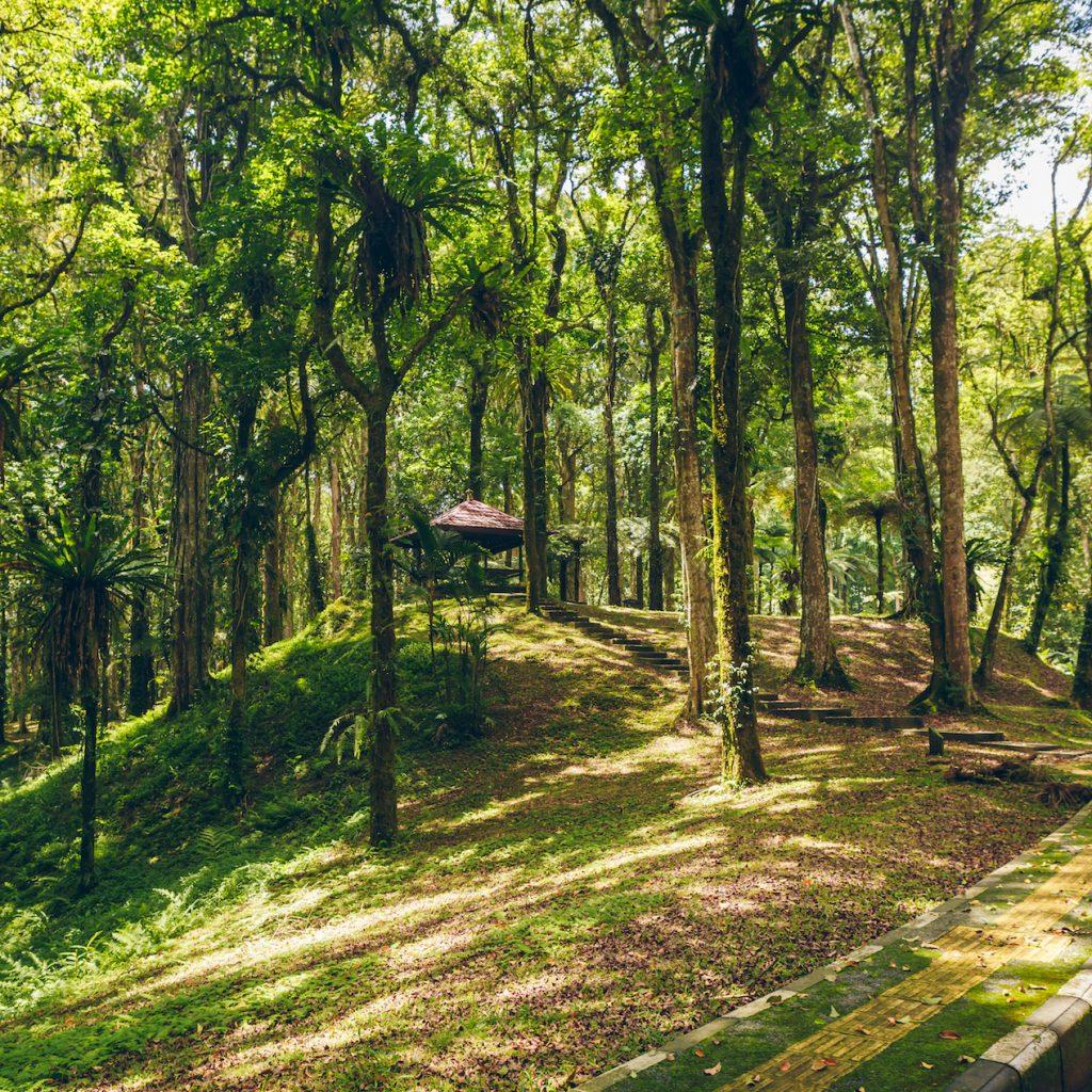 Bali Botanical Garden atau Kebun Raya Bali menawarkan liburan yang lain di pulau Dewata selain pantai.