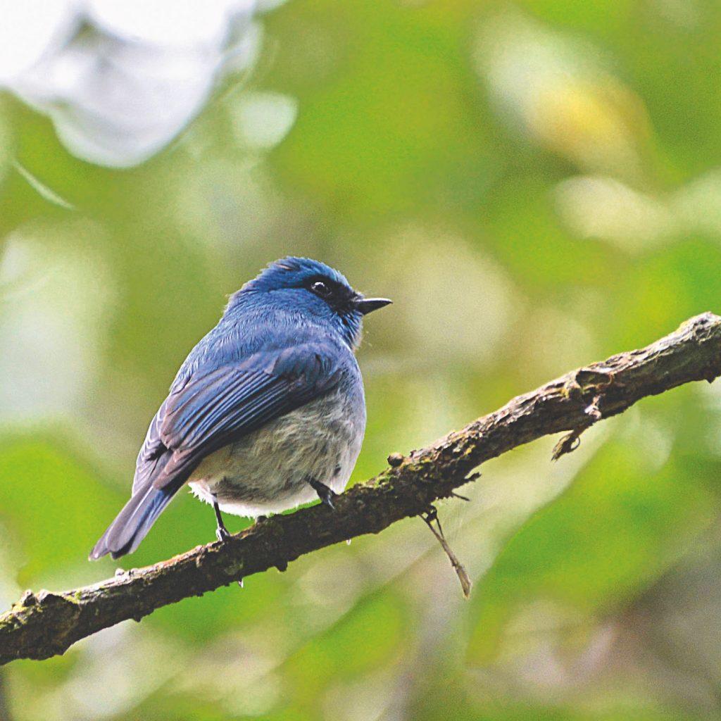 asyiknya mengintip burung bukan saja melihat keindahan karya sang pencipta, tapi juga sarana melestarikannya.