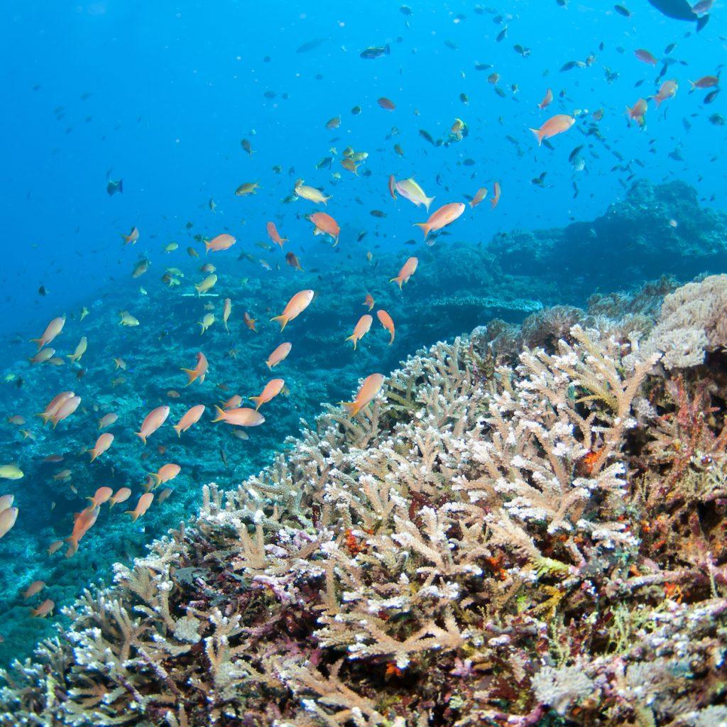 Sensasi wisata dalam air bisa dilakukan berupa 'jalan-jalan' di dasar lautan, seperti di Lembongan, Bali.