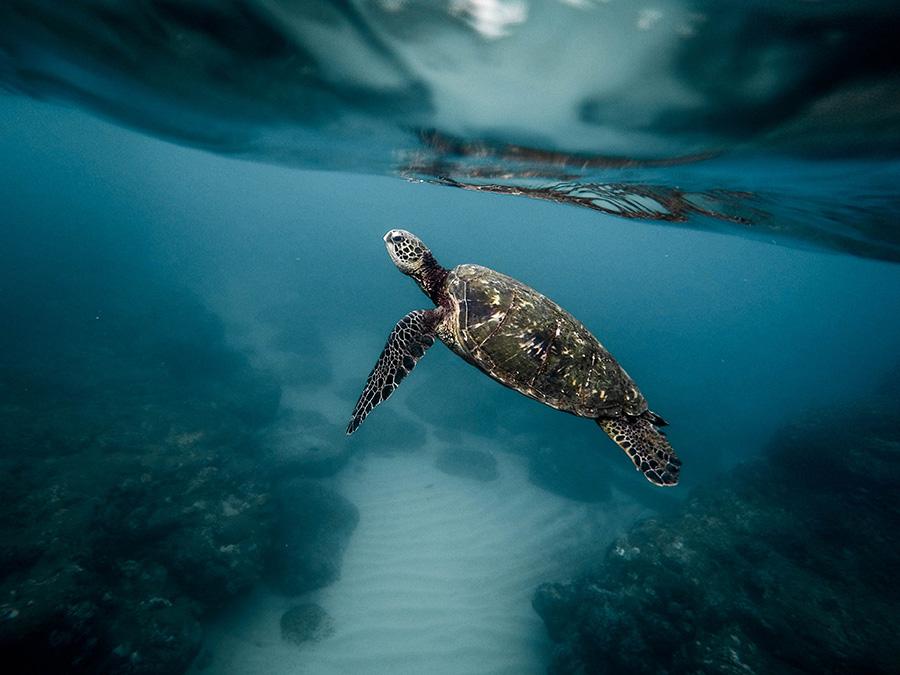 underwater photography 003