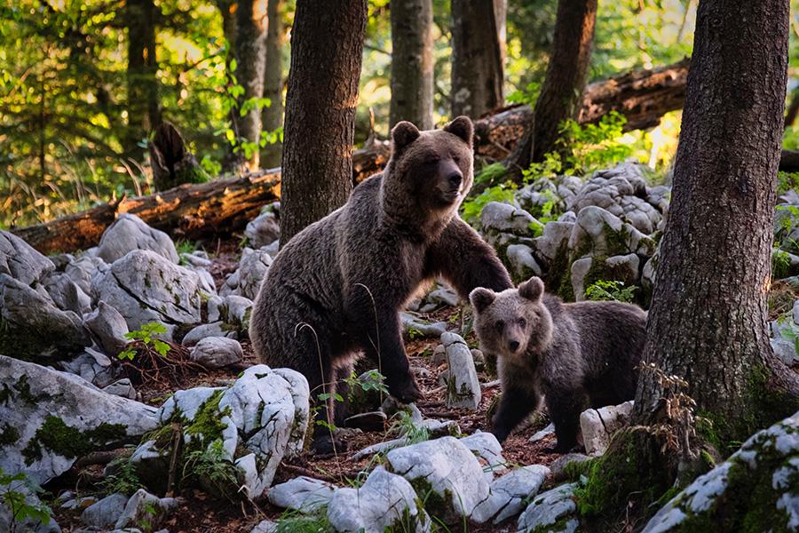 wildlife photography 002