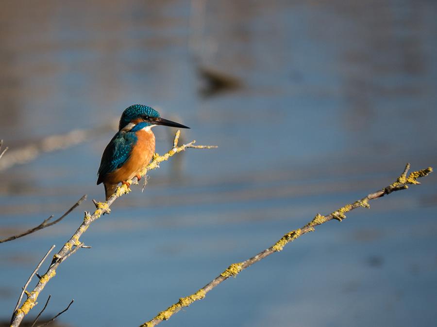 wildlife photography 003