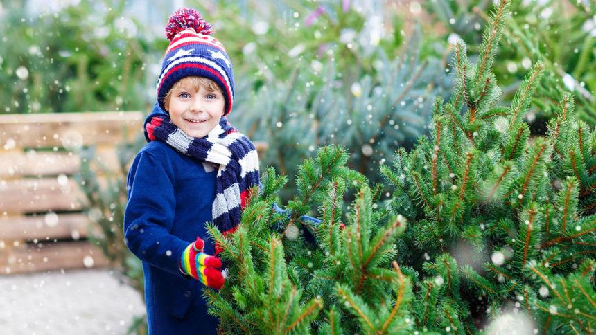 real-christmas-tree_1543440911581_22082317_ver1.0_1280_720