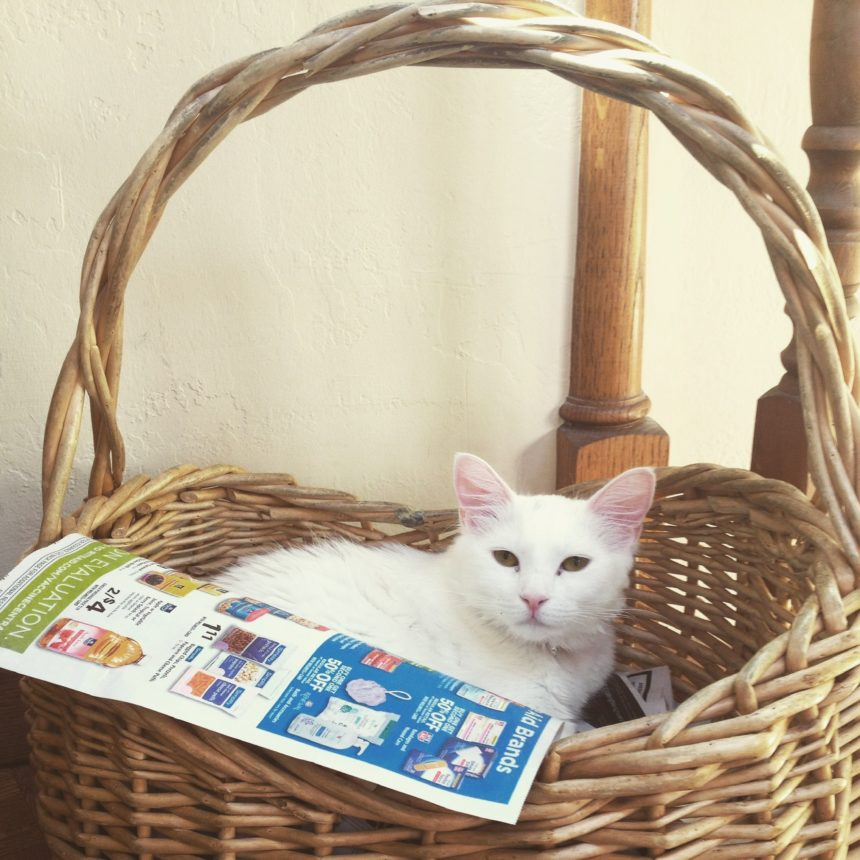 Newsroom cats 5410