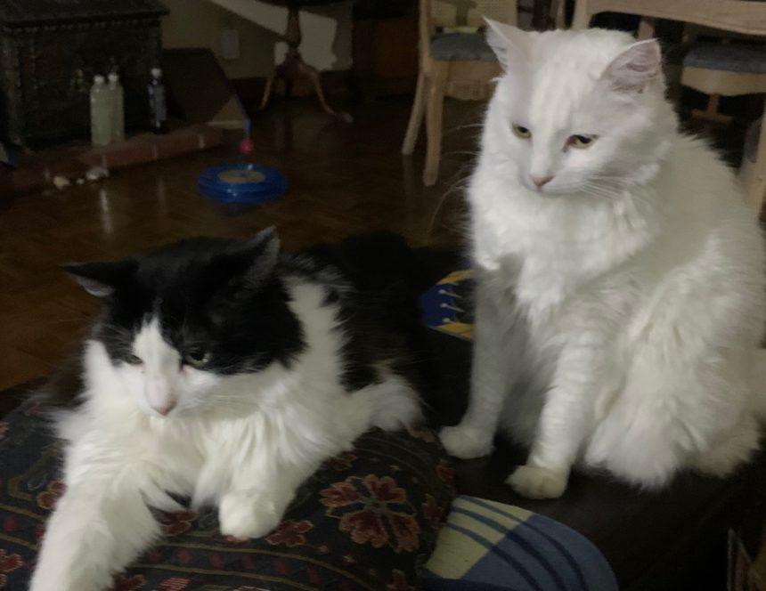 Newsroom cats 5413