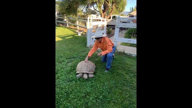 chp tortoise 6_1563234647777.jpg_38992431_ver1.0_640_360