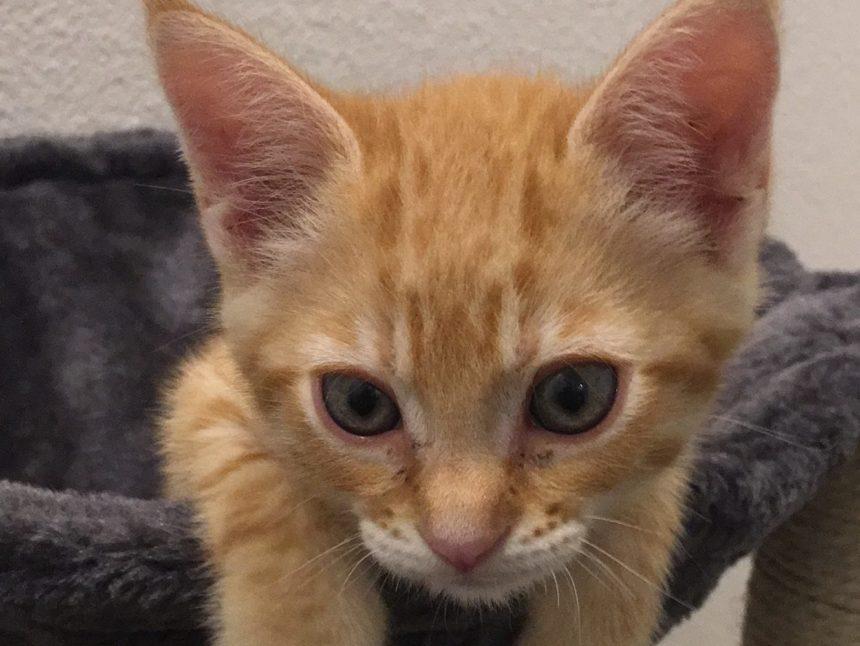Newsroom cats 5414