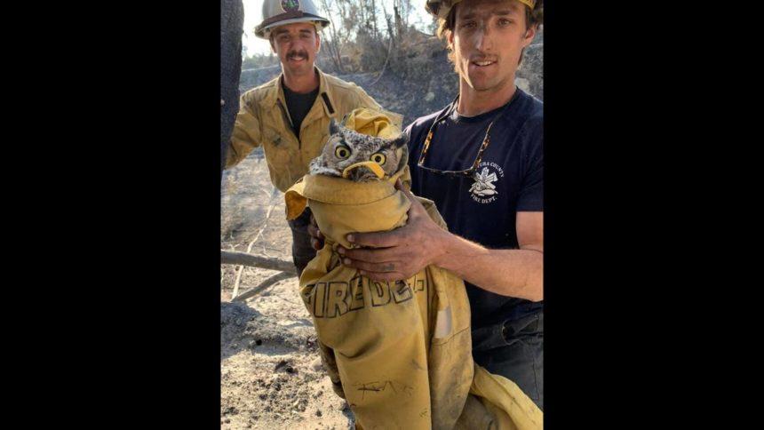owl saved Maria fire