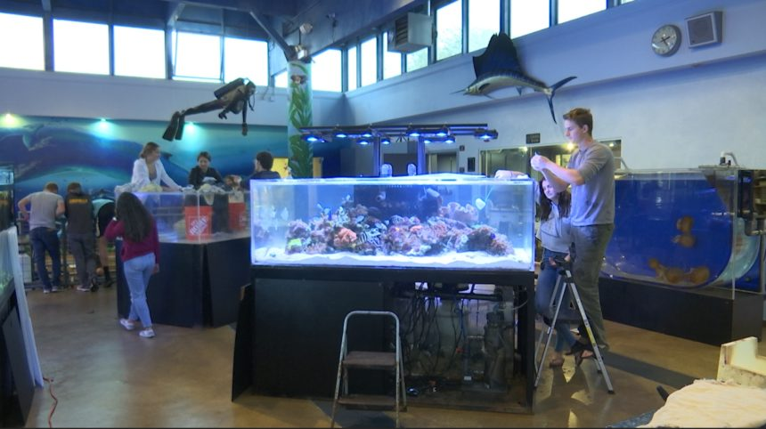 Cabrillo High School Aquarium undergoing major renovation ...