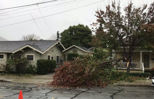 Tree limb knocks down power line