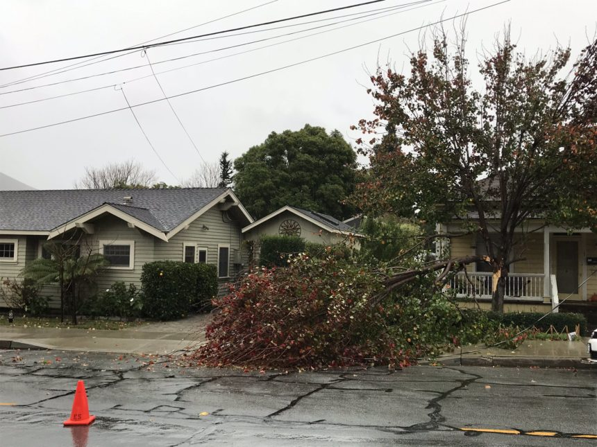 Tree limb knocks down power line