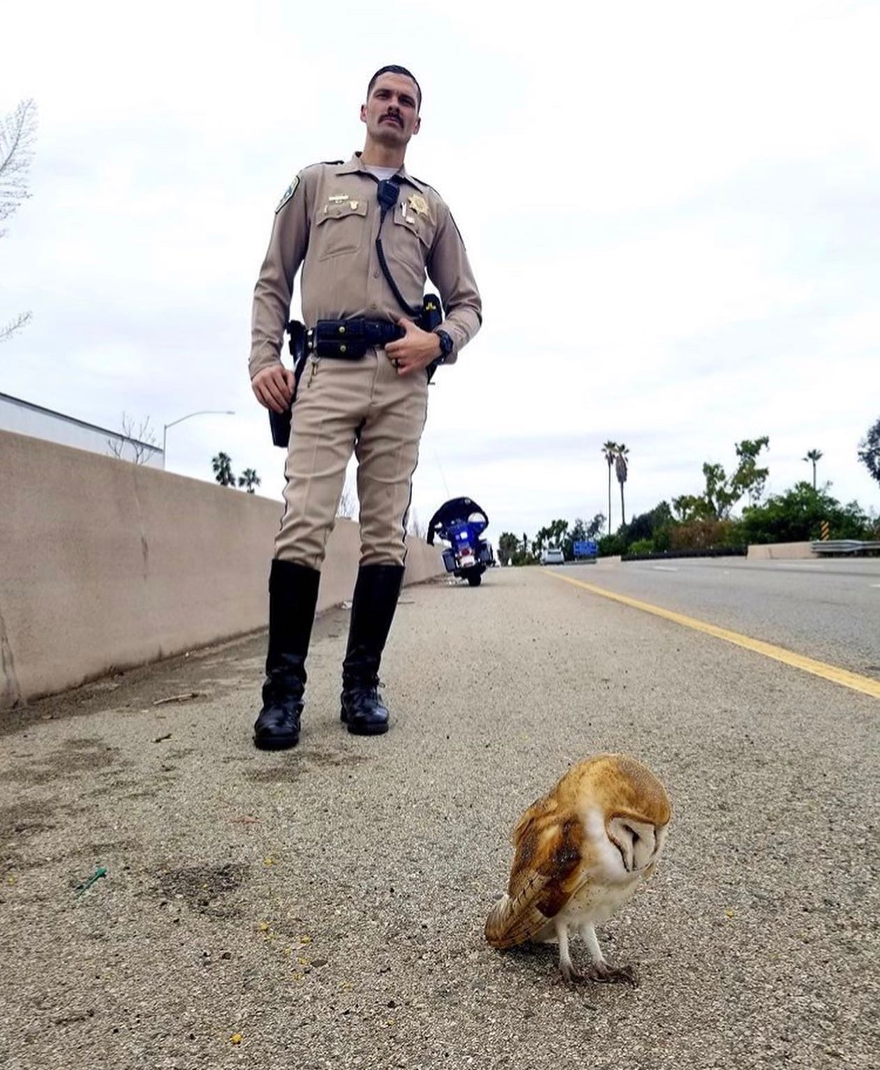 Owl hit along 101 freeway makes full recovery