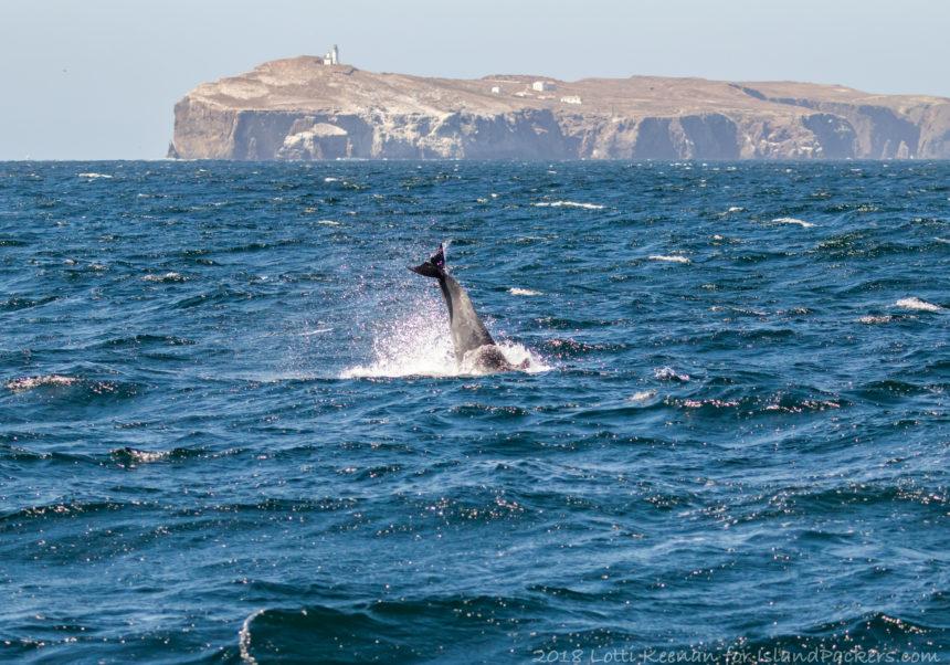 whale watching Ventura