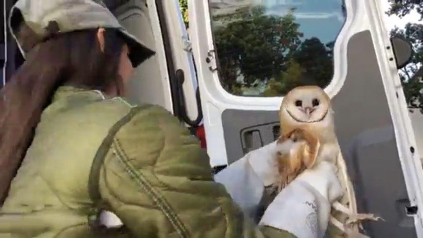 101 Barn owl release