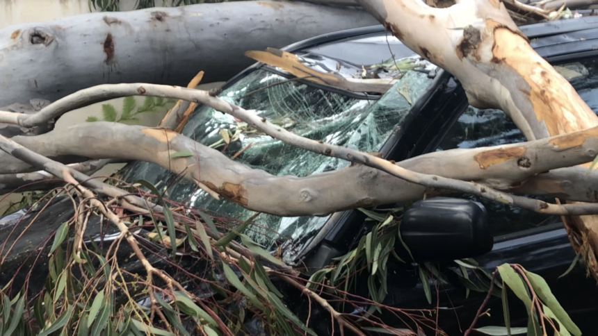 Tree damages SUV in Montecito