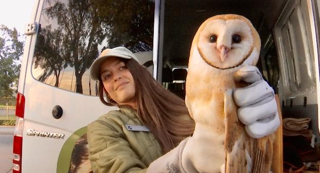 Owl release