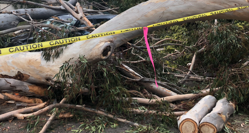 Fallen tree hits vehicle Montecito