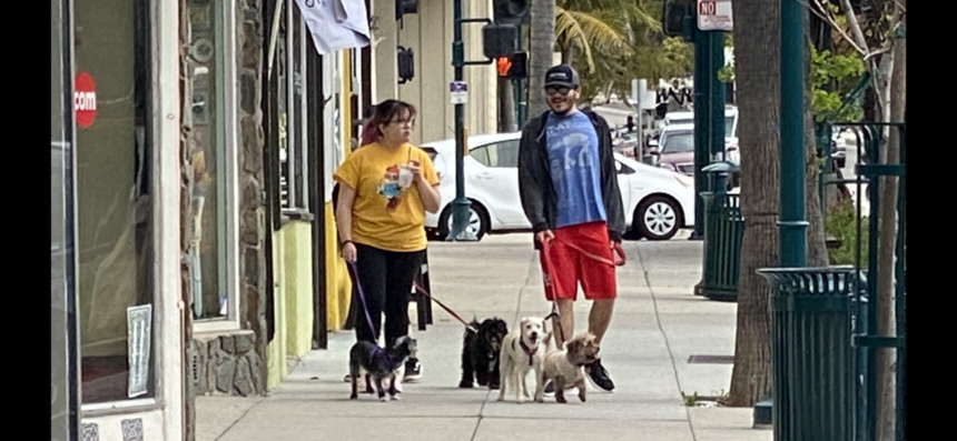 Dog walkers exercise