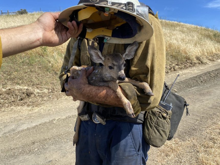 fawn rescued by firefighters