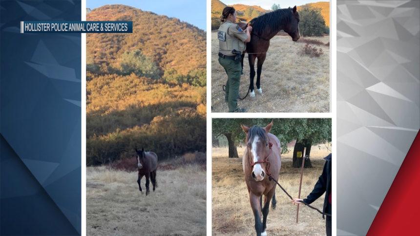 HOLLISTER HORSE FOUND