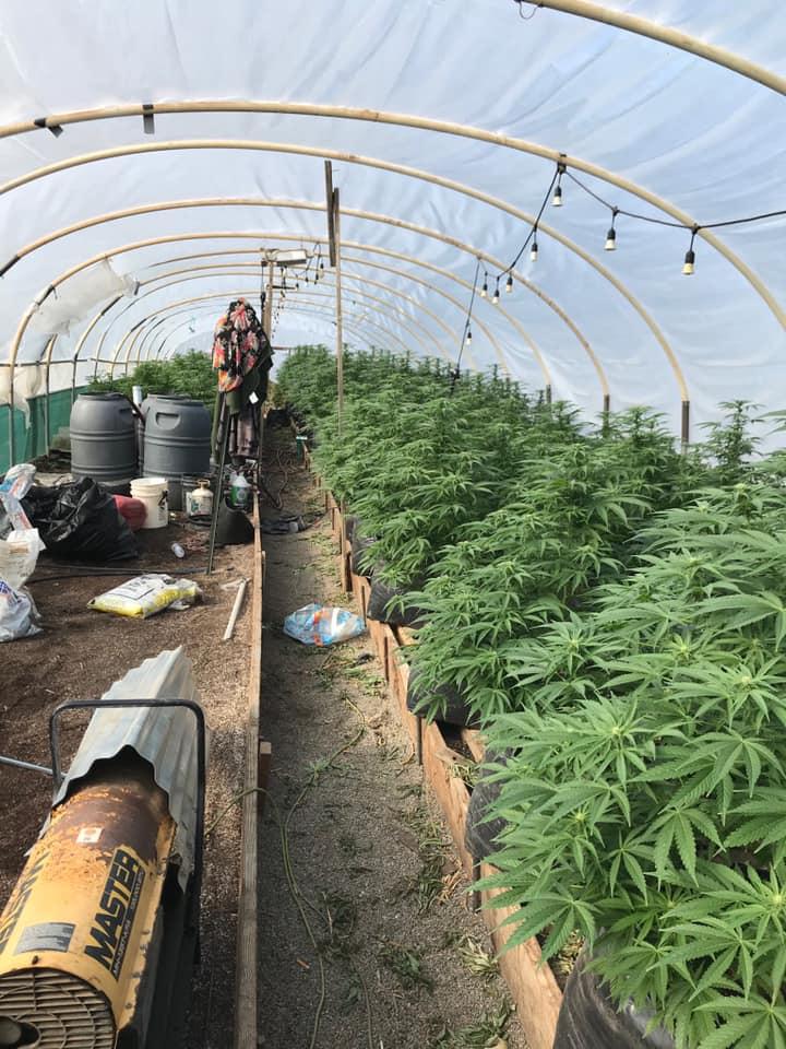san benito county illegal marijuana grow