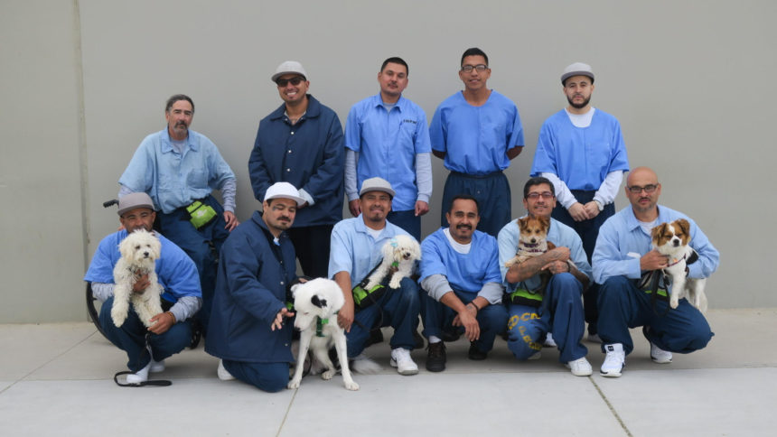 Shelter dog program at Salinas Valley State Prison expanding - KION546