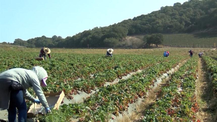 FARMWORKER.mp4.00_00_27_06.Still001