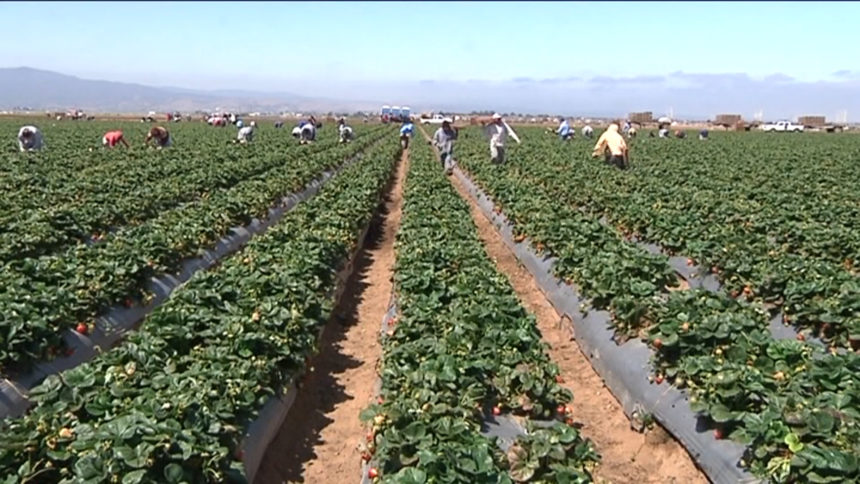 County officials: 25% of COVID-19 cases in Monterey County come from agriculture industry