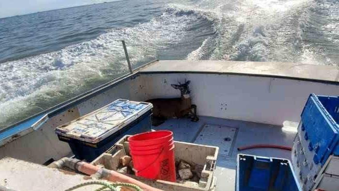 buck lobsterman Photo Ren Dorr Cropped
