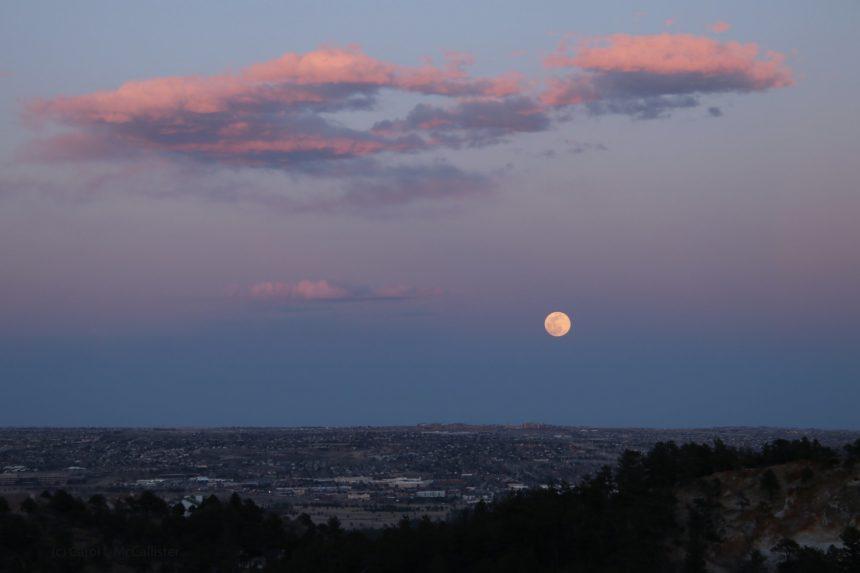 Carol McCallister pink moon