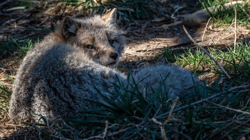 black bart pueblo zoo Cropped