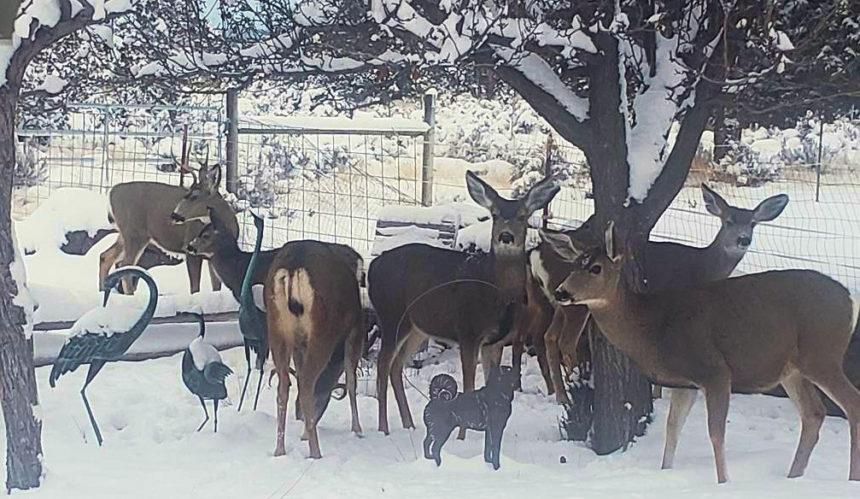 Powell Butte Thanksgiving dinner guests Kenna Hoyser 1128