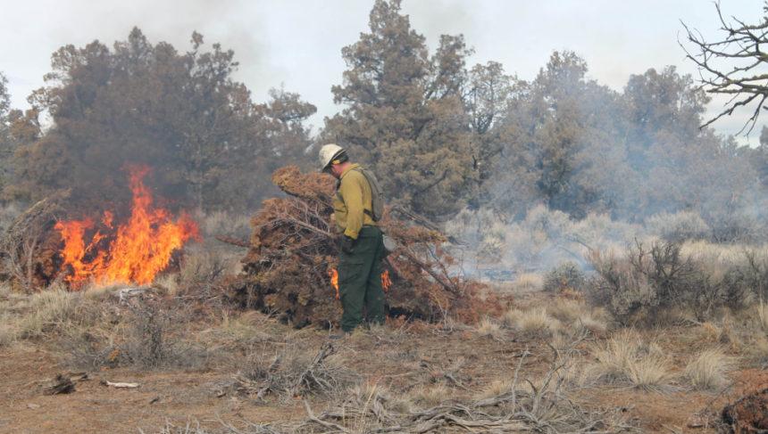 BLM burning juniper slash piles