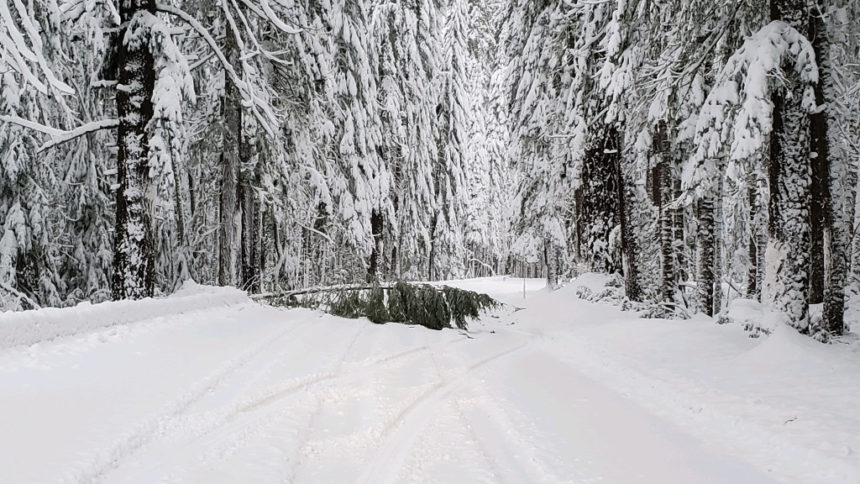 Hwy. 230 downed tree ODOT 1-13