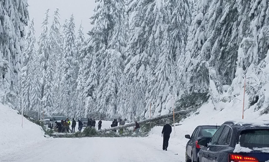 Tree down on Hwy. 20 Laurie Rice 1-12
