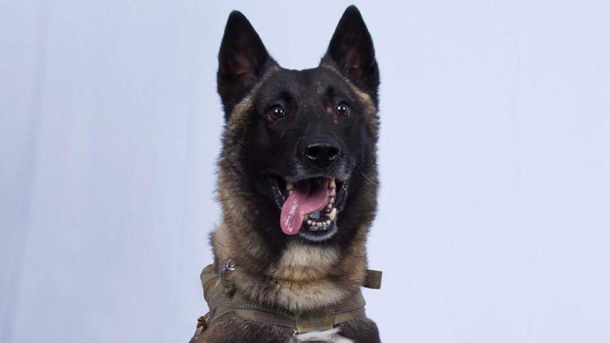 military-dog-baghdadi-raid