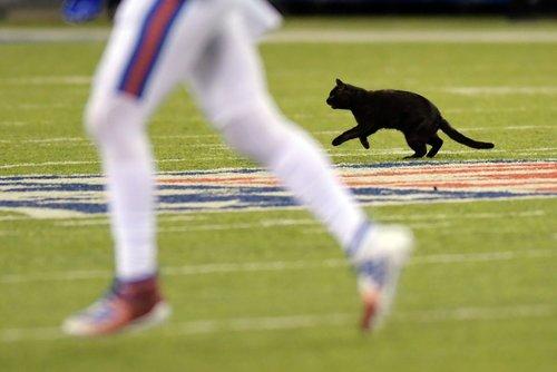 black cat Monday night football