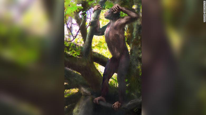 danuvius-guggenmosi-ape-exlarge-169