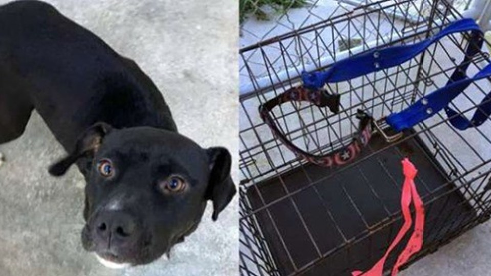 Mother dog seen pulling crate of puppies after being abandoned - KVIA