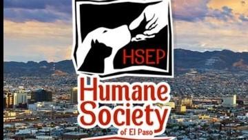humane society_el-paso