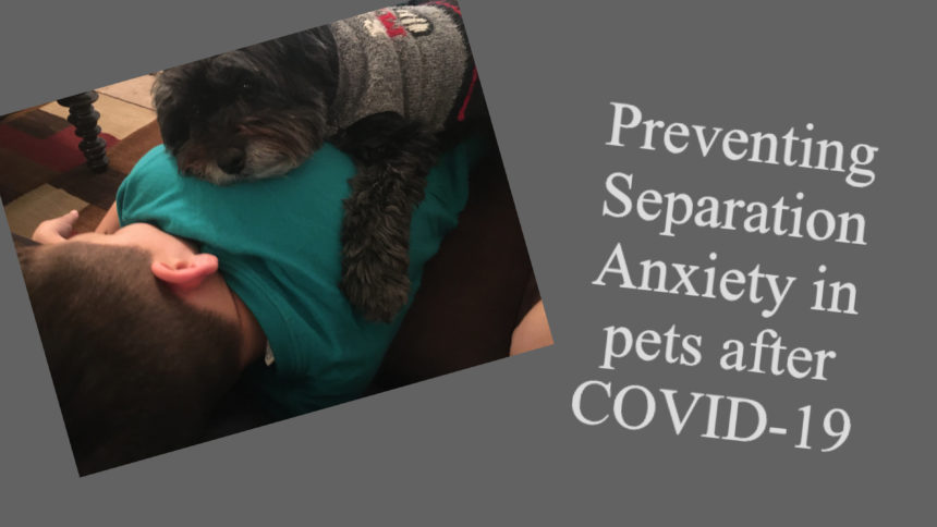 How to prevent separation anxiety in pets as you head back to the office after Covid-19 - KVIA