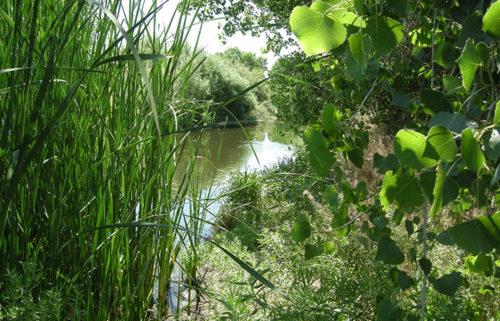 rio-bosque-wetlands