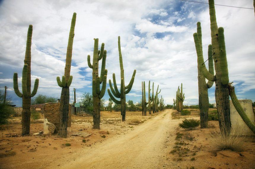 desert-392747_1920